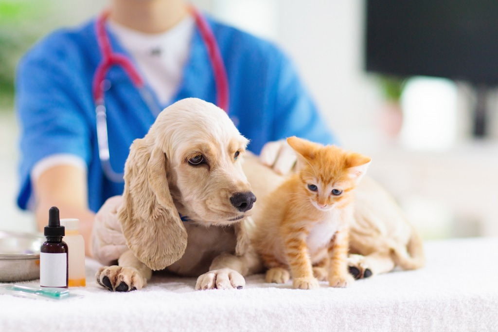 ペット用のCBDオイルって?犬や猫に効果あり?